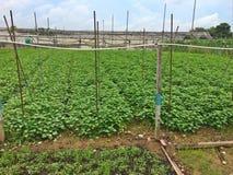 Quan Fa organic farm Royalty Free Stock Photo