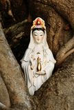 Quan Yin ( goddess of mercy ) of Chinese. Gods in wood trunk Royalty Free Stock Image
