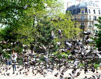 Quand à Paris un pigeon des oiseaux Photo stock