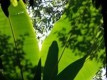 Quand la lumière du soleil brille sur des feuilles dans la forêt à feuilles persistantes Photographie stock libre de droits