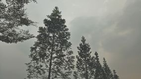 quando amate la natura, la natura vi amerà anche Fotografia Stock