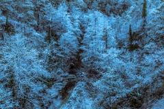 Quando as árvores forem congeladas imagem de stock royalty free