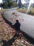 Quando ataque das folhas Imagem de Stock