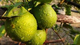 Quando eu amar a batida a água, cor do limão foto de stock