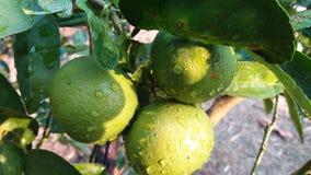 Quando eu amar a batida a água, cor do limão foto de stock royalty free