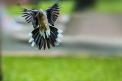 Quando gli uccelli ritornano Immagini Stock Libere da Diritti