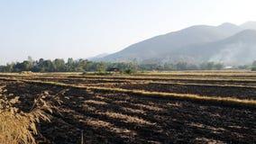 Quando il riso è raccolto, le erbacce sono bruciate immagini stock libere da diritti