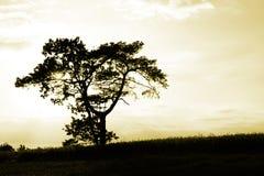 Quando il sole va giù Fotografie Stock