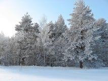 Quando l'inverno è bello fotografia stock libera da diritti