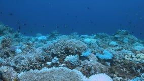 Quando um recife de corais morrer video estoque
