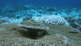 Quando um recife de corais morrer vídeos de arquivo