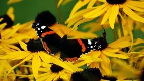 Quando uma borboleta encontrou seu ideal floresça Foto de Stock