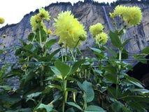 Quando una cascata è vista attraverso i fiori Immagini Stock