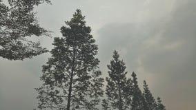 quando você ama a natureza, a natureza amá-lo-á demasiado Fotografia de Stock