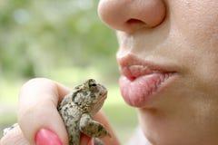 Quante rane lo hanno baciato Fotografia Stock