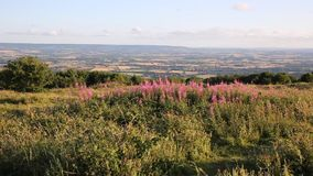Quantock Hills Somerset England UK countryside views towards Blackdown hills and Exmoor PAN stock video footage