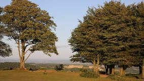 Quantock Hills Somerset England UK Seven sisters trees on top of Cothelstone PAN. Quantock Hills Somerset England UK Seven sisters trees on top of Cothelstone on stock video