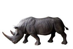 Quare-χειλικός ρινόκερος που απομονώνεται στο άσπρο υπόβαθρο Στοκ Φωτογραφία
