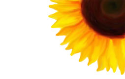 A quarter on a sunflower Stock Image