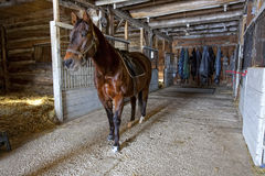 Quarterhorse in Stable Stock Images
