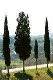 Quartet d'arbres Images libres de droits