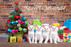 Quartet de Noël de Meowy des chatons Photo stock