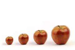 Quarteto vermelho da maçã Imagem de Stock
