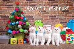 Quartetto di Natale di Meowy dei gattini Fotografia Stock