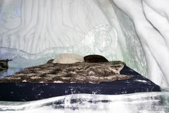Quarto de hotel do gelo de Quebeque imagens de stock royalty free
