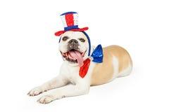 Quarto felice di stenditura del bulldog di luglio Fotografia Stock Libera da Diritti