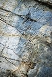 Quartz veins on blue limestone rock stock images