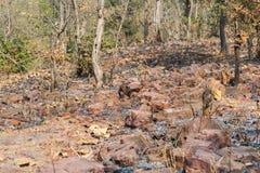 Quartzite αιματίτη βράχοι στο δάσος στοκ φωτογραφία με δικαίωμα ελεύθερης χρήσης