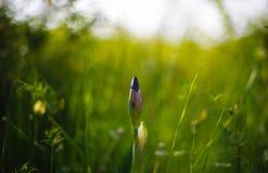 Quasi fioritura Immagini Stock