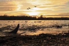 Quasi tramonto di inverno Fotografia Stock