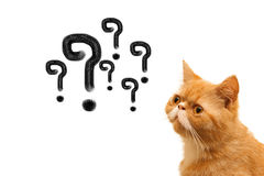 Quation mark and cat. On white background royalty free stock images