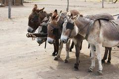 Quatre ânes dans le rivage avec un chariot Photo libre de droits