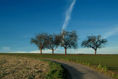 Quatre arbres Photo stock