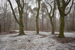 Quatre arbres dans une forêt neigeuse photographie stock libre de droits