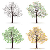 Quatre arbres de saisons Photos stock