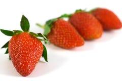 Quatre baies de fraisier commun Image stock