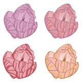 Quatre bourgeons d'une tulipe de couleur différente Photo libre de droits
