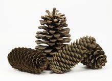 Quatre cônes de pin Photo libre de droits