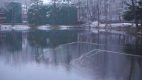 Quatre canards de canard nagent dans l'étang de Wishne banque de vidéos