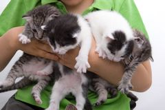 Quatre chatons retenus par Child Photo libre de droits