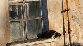 Quatre chats drôles se reposent dans une vieux fenêtre et regard de cru dehors banque de vidéos