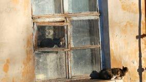Quatre chats dr?les se reposent dans une vieux fen?tre et regard de cru dehors clips vidéos