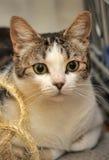 Quatre chats sur le divan Photographie stock
