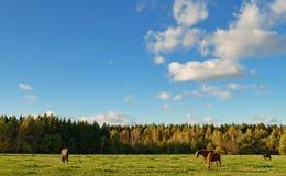 Quatre chevaux Images stock