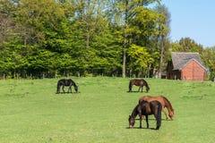 Quatre chevaux dans les prés Photo libre de droits