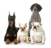 Quatre chiens de race différents Photos libres de droits